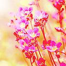 Littlel pink flowers2 by RosiLorz