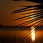 The Palm Leaf and the Setting Sun by DebbyTownsend