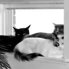 Window Sill Cats by SuddenJim