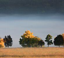 Mist over Turon River, Sofala, NSW by Ian Ramsay