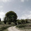 winding dry dirt road on Irish farm by morrbyte