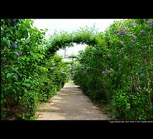 Lilac Arches At Planting Fields Arboretum State Historic Park - Upper Brookville, New York by © Sophie W. Smith