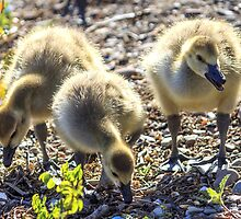 Gosling Siblings by Mikell Herrick