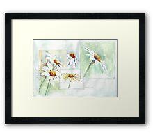The Little Daisy  Framed Print