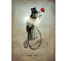 The Groom Photographic Print