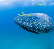 Whaleshark and friends by Fiona Ayerst