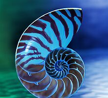 Chambered Nautilus  by Paul Eekhoff