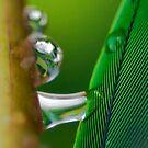 Dreams of Green by Kenneth Haley