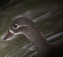 Female Mandarin Duck by Sauropod8
