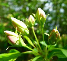 Budding Buds by MaeBelle