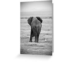 African Elephants (Loxodonta africana) Greeting Card