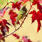 """""""Little Birdy Singing Me A Song"""" by Diana Graves Photography"""