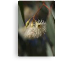 White Eucalyptus Canvas Print