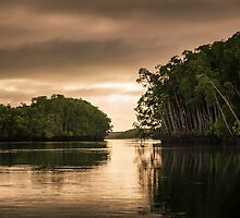 Morning on the Daintree V by Richard Heath