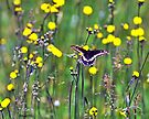 Lots of Yellow, and a Butterfly by Caleb Ward