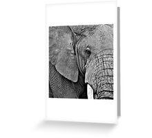 African Elephant (Loxodonta africana) Kenya Greeting Card