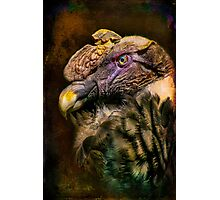 Finer Feathered Friends: Andean Condor Photographic Print