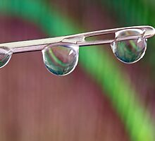 Water Drops by Debbie Moore