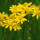 Yellow Posies For You by lorilee