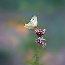 Cabbage White on Purple Top by KatMagic Photography