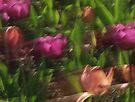 Tulips by Debbie Pinard