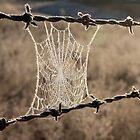 Frozen Web by Tim Coleman