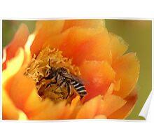 Desert Bee Poster