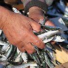 Sardines by Chantal Seigneurgens