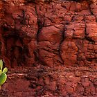 Nopal on Red Rocks by Larry3