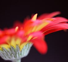 FLOWER 2 by PASLIER Morgan
