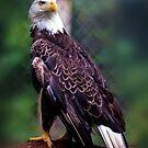 bald eagle by Alexandr Grichenko