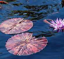Lily Pad by pictureit