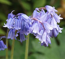 Bluebells - Ringing in Springtime! by Linda  Makiej