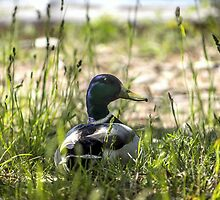 Quack Grass by Mikell Herrick