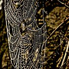 Rustic Web by D-GaP