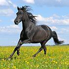 Paso Fino horse by Manfred Grebler