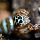 Eyes of the Spider by DebbyTownsend
