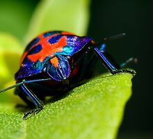 Stink bug 007 by kevin chippindall