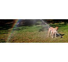 Rainbow maker Photographic Print