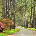 Plantation Road by JHRphotoART