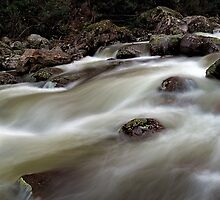 Downstream Race by Mark  Lucey
