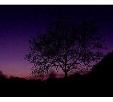 Lilac Tree Photographic Print