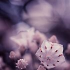 Mountain Laurel by EkaterinaLa