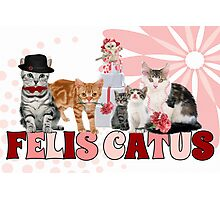 Felis Catus - for the Cat Lover's Eyes Only Photographic Print
