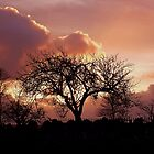 Devon Sunset by Matt Sibthorpe