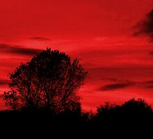 Blood Sky by Matt Sibthorpe