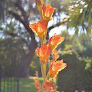 Parrot Lily In The Garden by ©Dawne M. Dunton