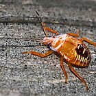Immature Stinkbug by Otto Danby II