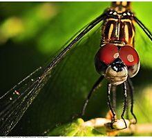 Spring Dragonfly by Dennis Stewart
