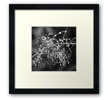 Beautiful Tangled Mess Framed Print